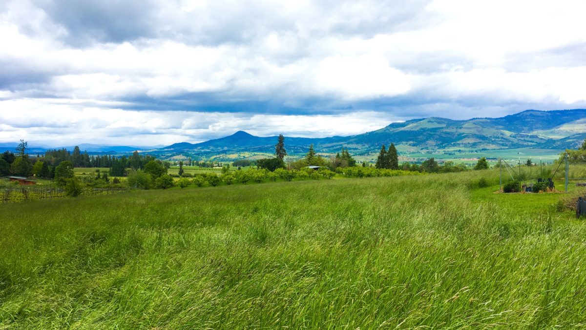 OUR CLINIC is located in SOUTHERN OREGON'S BEAUTIFUL ROGUE VALLEY